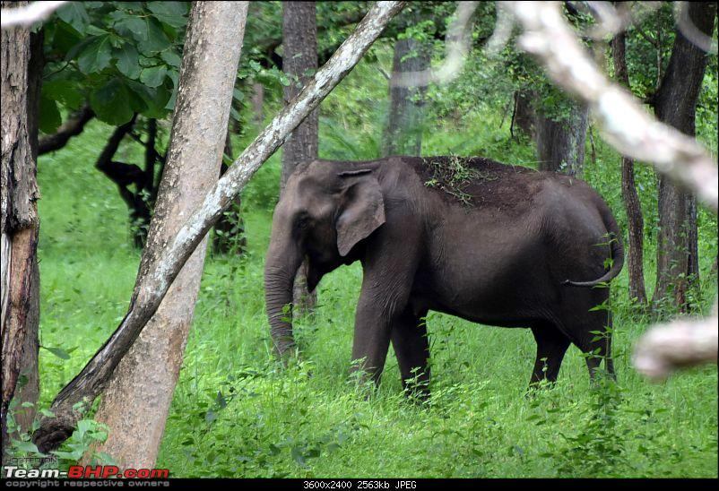 A night at the Parambikulam Tiger Reserve-day1elephant.jpg