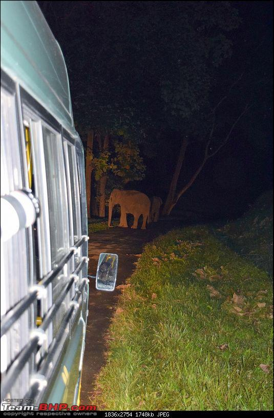 A night at the Parambikulam Tiger Reserve-dayelephantblock.jpg