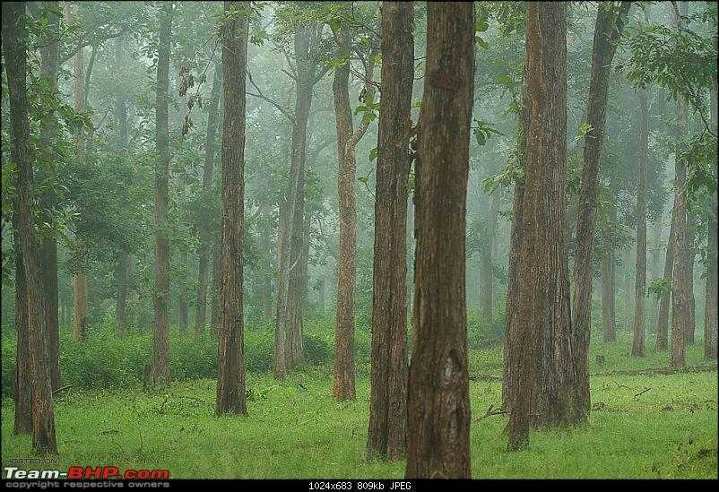 Photologue: Kabini, my first Tiger sighting-dsc_4877.jpg