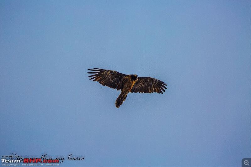 Uttarakhand: An Ode to the Himalayas & Spirituality-uk-83-himalayan-vulture_.jpg