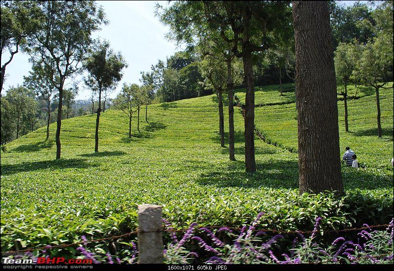 Another Trip Report to Ooty!-dsc_1466.jpg