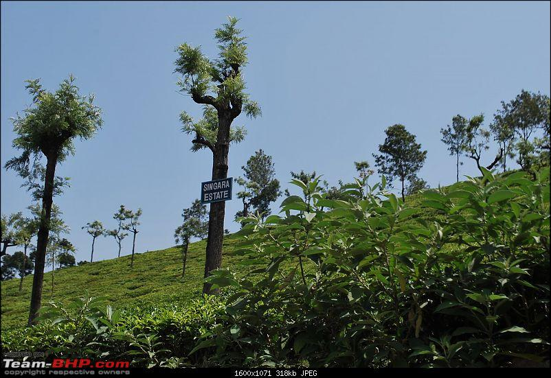Another Trip Report to Ooty!-dsc_1487.jpg