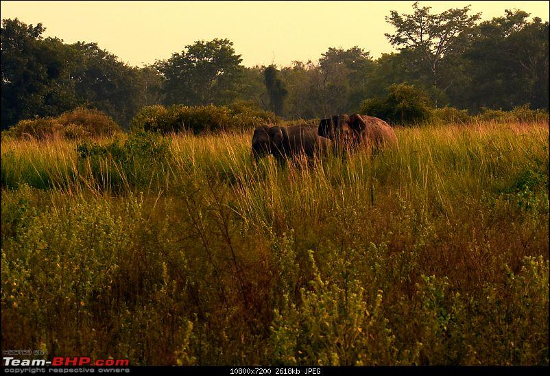 A short trip for a long weekend - Corbett with the Mahindra Scorpio-dsc_1922.jpg