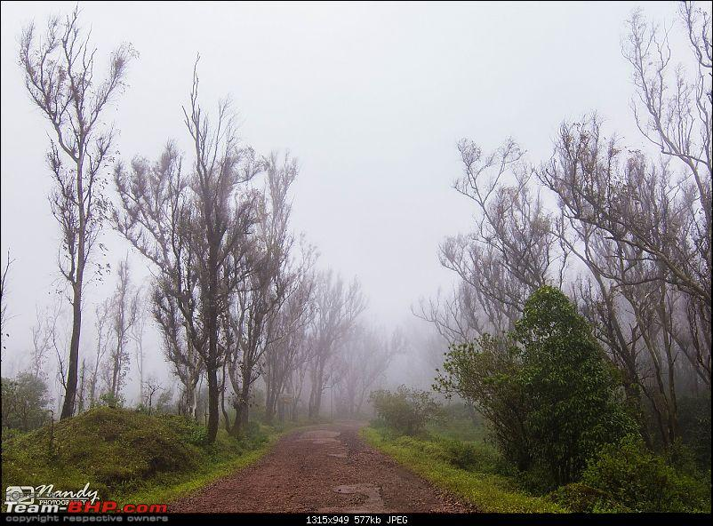 When brown turns green – Ride to Chikmagalur!-dsc_0694.jpg