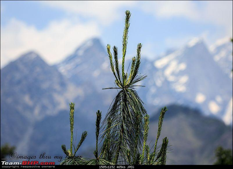 Uttarakhand: An Ode to the Himalayas & Spirituality-uk-354-auli-_.jpg