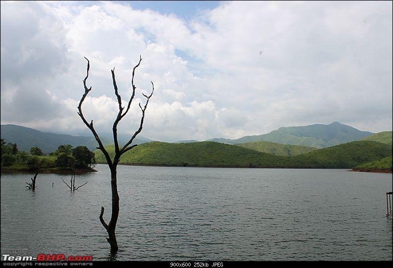 Horse-Face: The Jewel of Western Ghats-img_1990.jpg