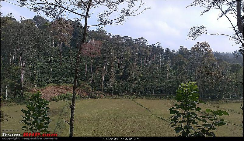 Across the plains and around the hills to drive by the sea (Virajpet, Kannur & Muzhappilangad)-forest-10.jpg