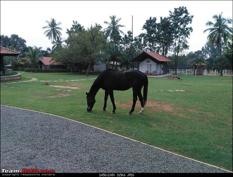 Dawn to Dusk - Embassy Horse Riding School in Bangalore-5-large.jpg