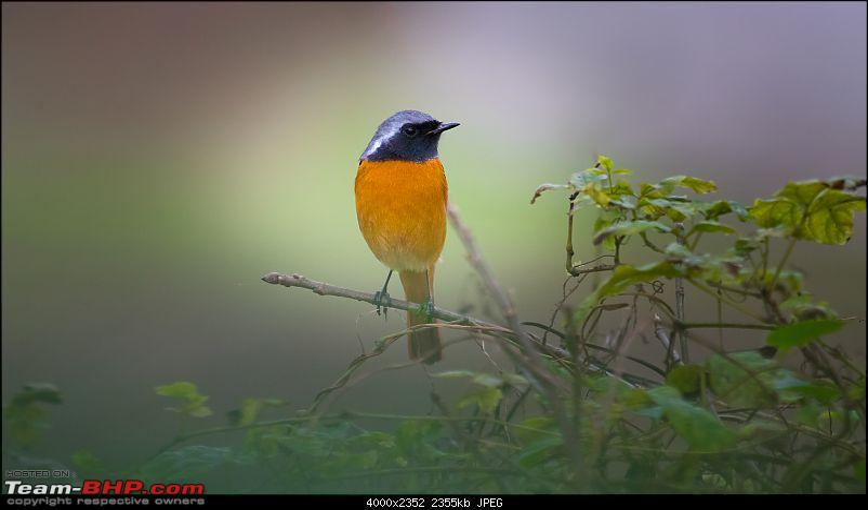 Photologue: Urban Wildlife-_dsc796622.jpg