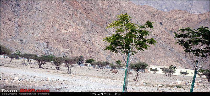 Images from my Fujairah & Oman trip-dsc_0146.jpg