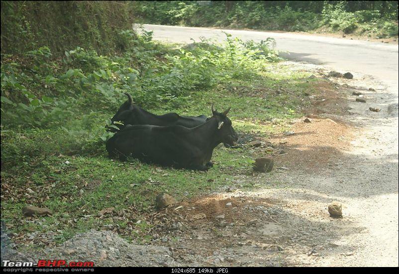 Bengaluru-Dharmastala-Kukke-Murudeshwar-Idugunji-Bengaluru in Safari 2.2L VX Dicor-dsc01748-large.jpg