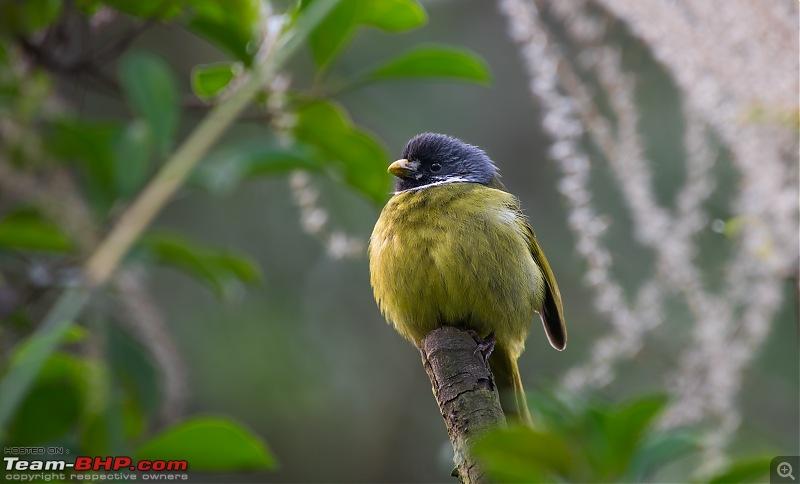 Photologue: Urban Wildlife-_dsc89633.jpg