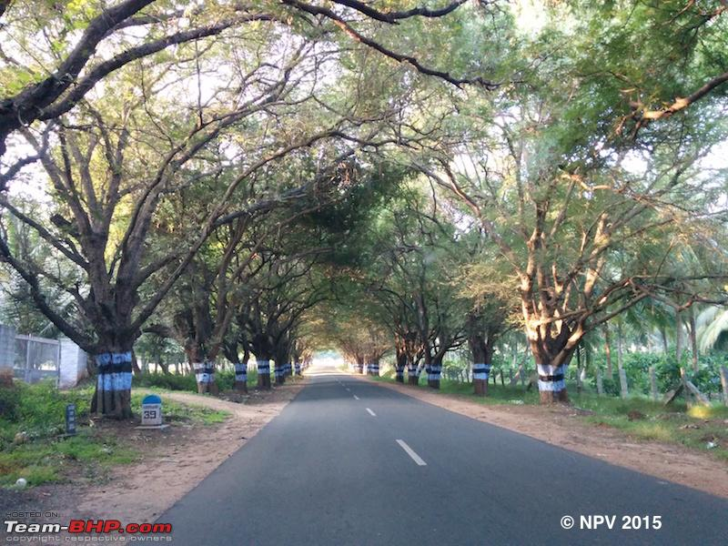 Name:  2.Lovely road after Anaikatti.jpg Views: 1132 Size:  300.9 KB