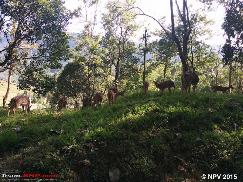 Name:  51.Spotted Deer.jpg Views: 786 Size:  323.1 KB