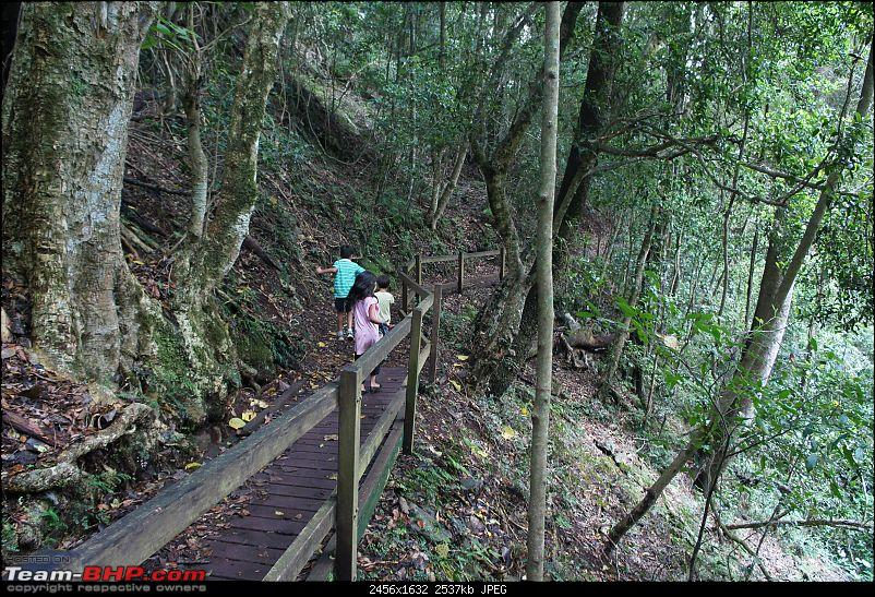 Our venture at exploring the Australian Outback-bunya-forest-1-dsc01187.jpg