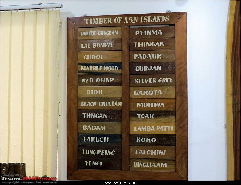 ...and a Man went to Andaman! Holiday in the Andaman Islands-timbers.jpg