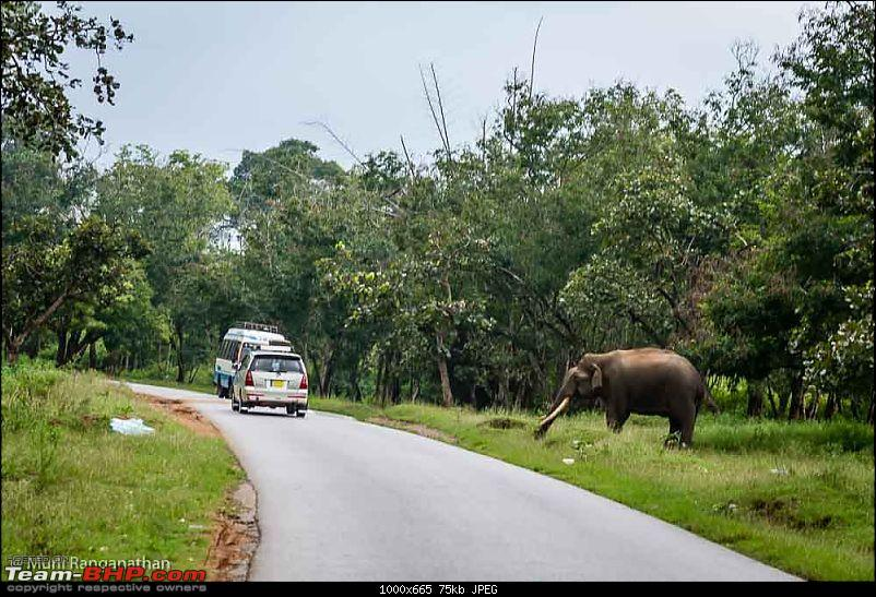 A drive through some of the Wildlife Sanctuaries in the Western Ghats-mr2_3520.jpg
