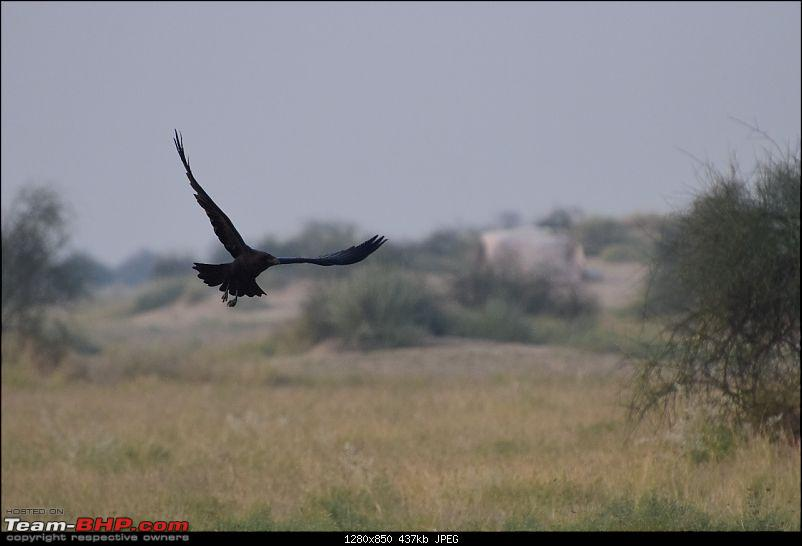 Forts, Palaces, Wildlife and more - 9,500 kms across South, West and North India-dsc_2752-1280x850.jpg