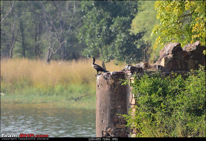 Forts, Palaces, Wildlife and more - 9,500 kms across South, West and North India-dsc_4776-1280x853.jpg
