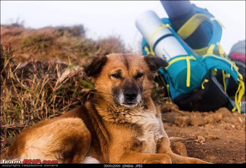 Weekend Getaway: Tadiandamol Trek (Karnataka)-dog.jpg