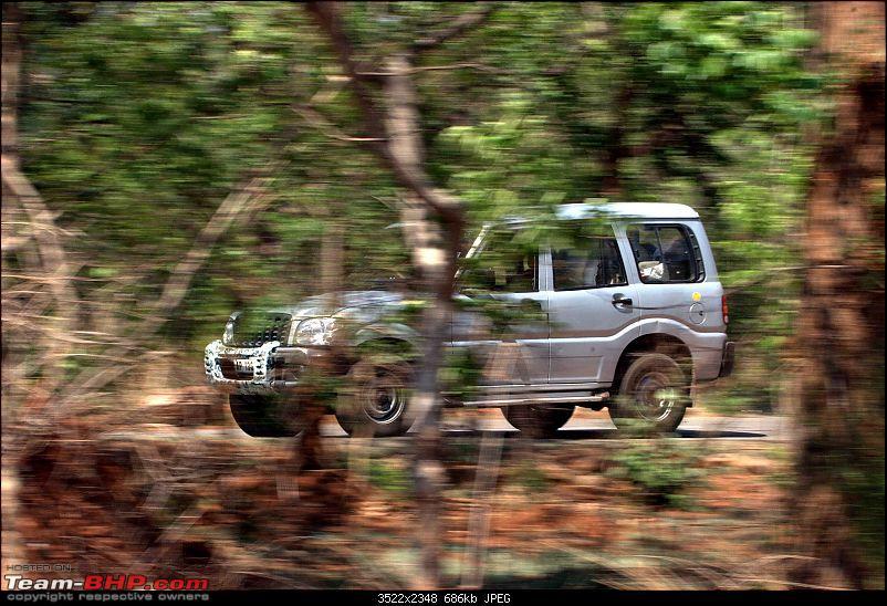 Weekend getaway in a forest-scorpio.jpg