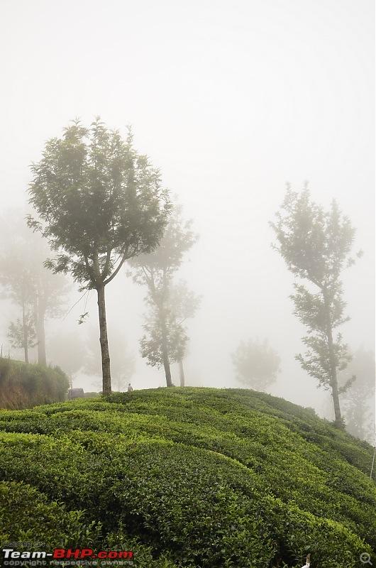 Ford Aspire visits Kerala : Traverses via a wildlife sanctuary, mountains, backwaters and a beach!-_dsc3756.jpg