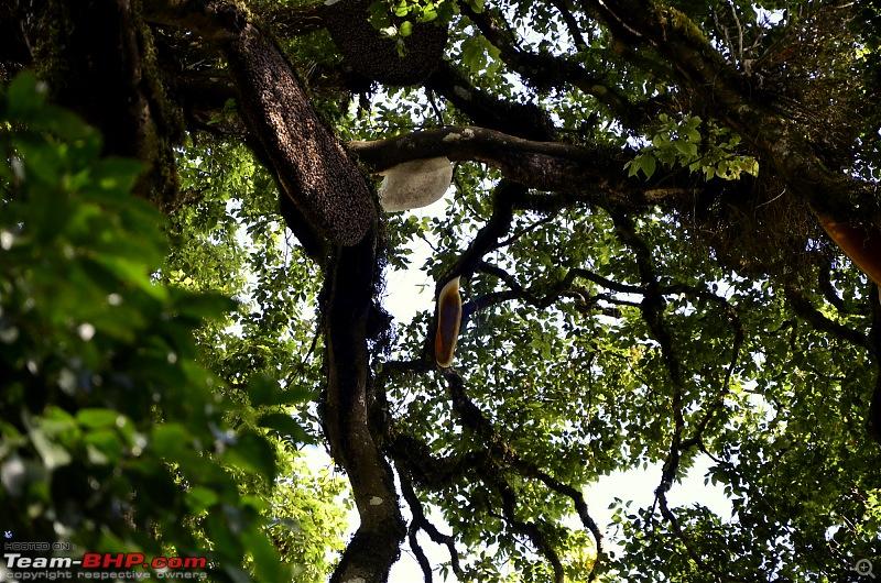 Ford Aspire visits Kerala : Traverses via a wildlife sanctuary, mountains, backwaters and a beach!-_dsc3824.jpg