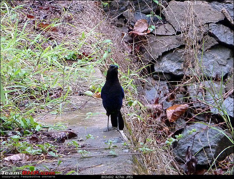 'Xing'ing around ! - A Long walk, Monsoon, Leeches, Wildlife & Railway History...-15.jpg