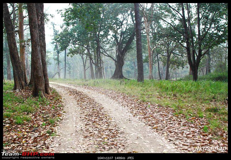 Solitary Exploration of the Nagarhole Forests-img_019.jpg