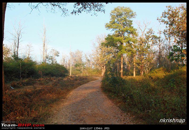 Solitary Exploration of the Nagarhole Forests-img_030.jpg