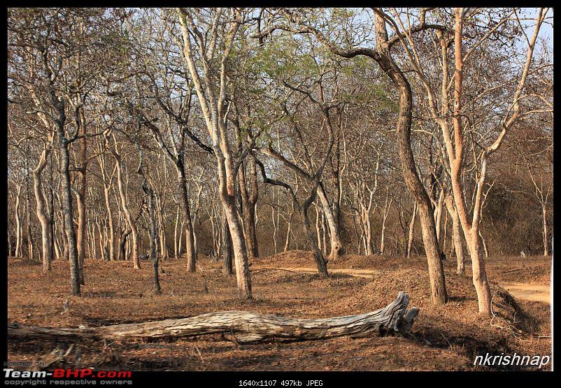 Solitary Exploration of the Nagarhole Forests-img_0117.jpg