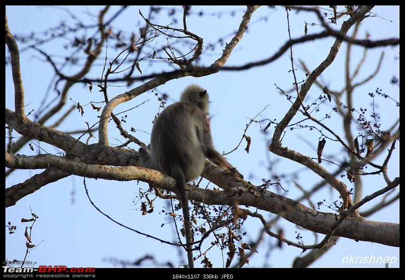 Solitary Exploration of the Nagarhole Forests-img_0157.jpg