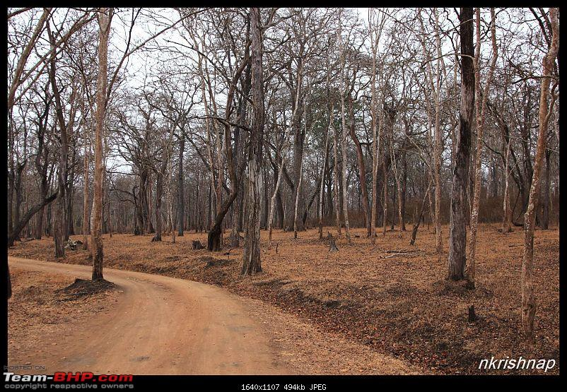 Solitary Exploration of the Nagarhole Forests-img_0292.jpg
