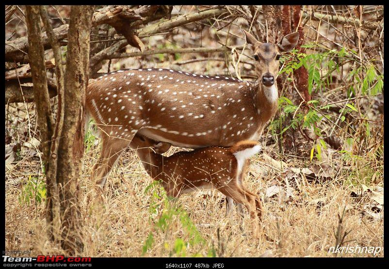 Solitary Exploration of the Nagarhole Forests-img_7222.jpg