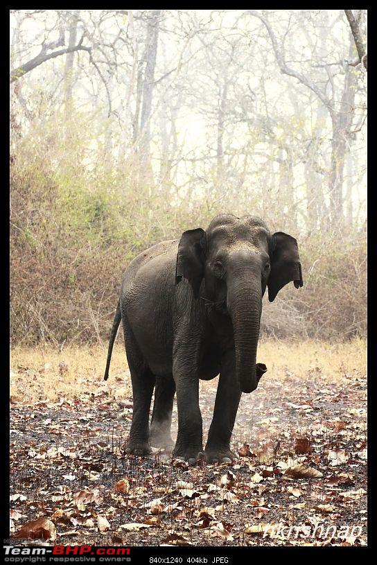 Solitary Exploration of the Nagarhole Forests-img_7270.jpg