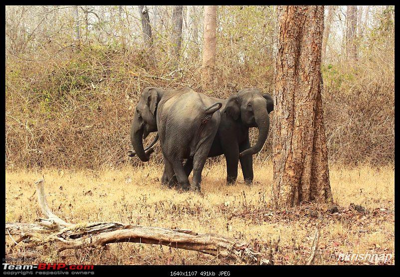 Solitary Exploration of the Nagarhole Forests-img_7275.jpg