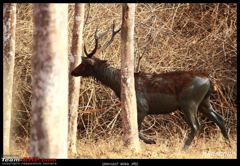 Solitary Exploration of the Nagarhole Forests-img_7324.jpg