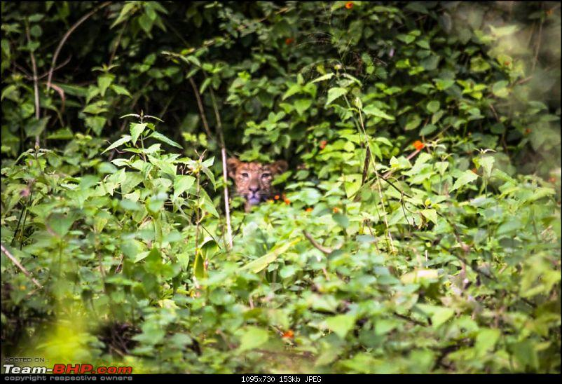 My Man Cave + A Close Encounter in Wayanad!-leo1.jpg