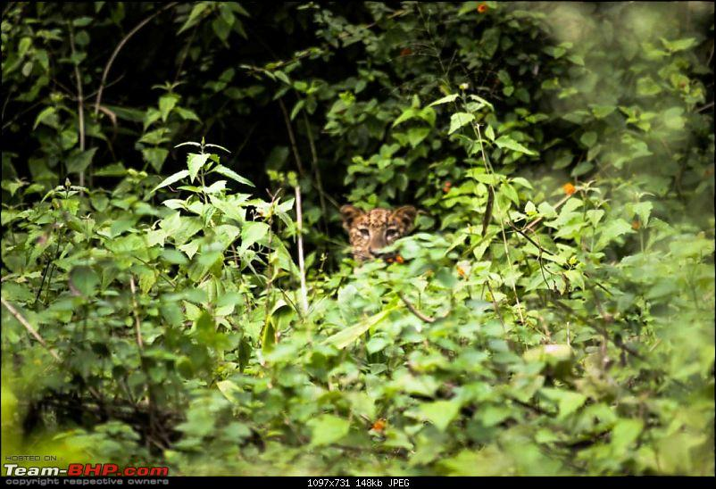 My Man Cave + A Close Encounter in Wayanad!-leo2.jpg