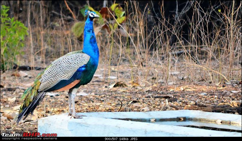 The book of Ellie – A couple's motorcycle tour of Gujarat-dsc_0469_photographic.jpg