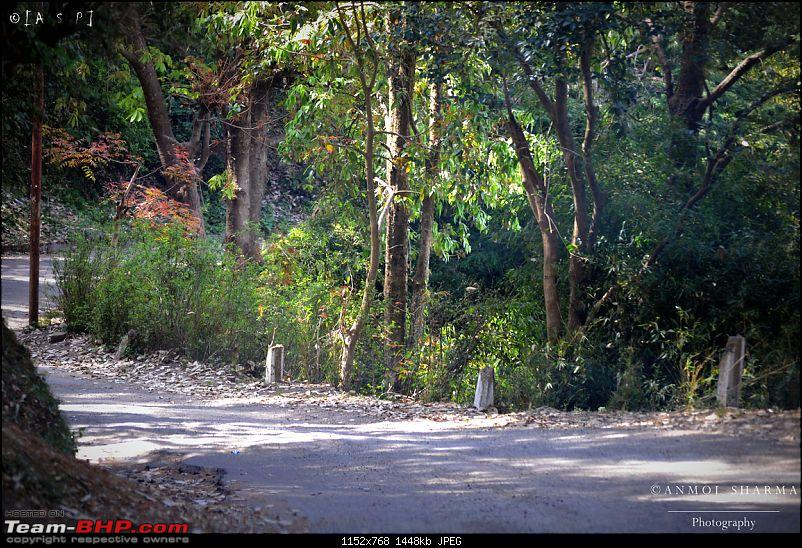 Photologue - A Drive to Kasauli, a drive to remember!-dsc_0498.jpg