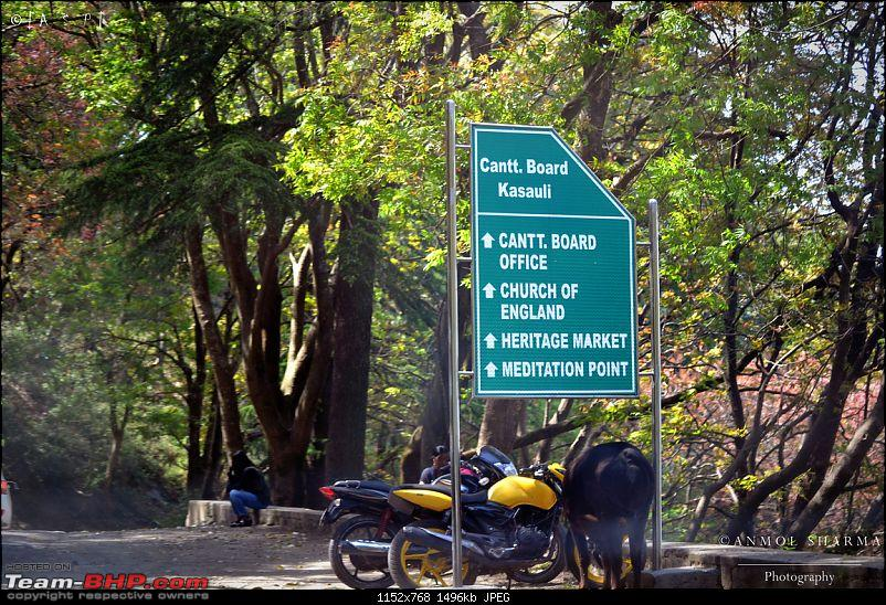Photologue - A Drive to Kasauli, a drive to remember!-dsc_0503.jpg
