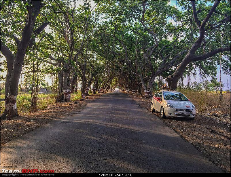 Road-Trip: Hyderabad to Mahabaleshwar-enroute-green-tunnel-.jpg