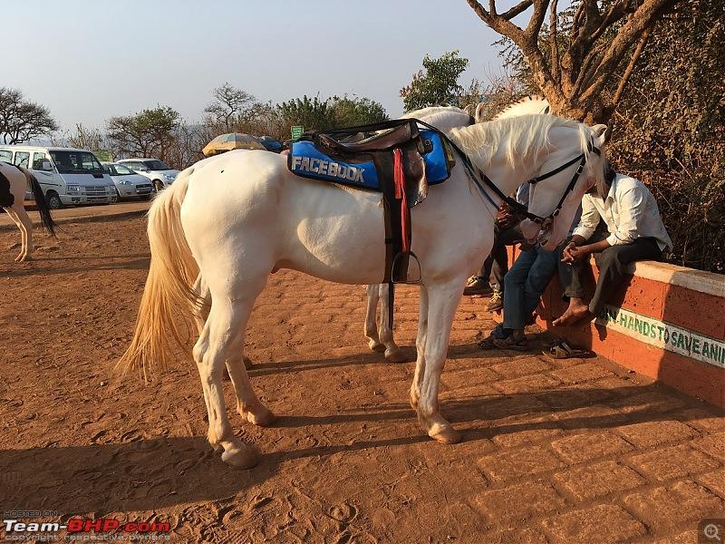 Road-Trip: Hyderabad to Mahabaleshwar-facebook-horse-arthurs-seat-.jpg