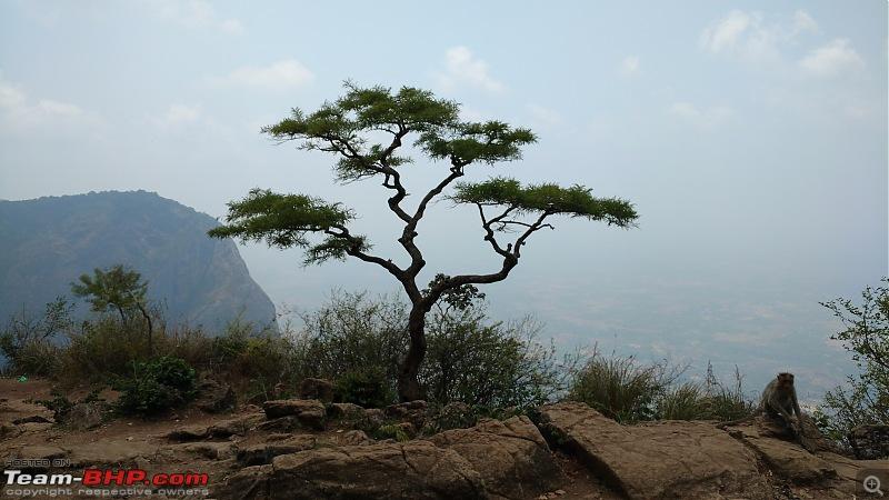 Poor man's Ooty to the garden city - Nelliampathi to Bangalore via Nagarhole-solo-nelli-treemin.jpg