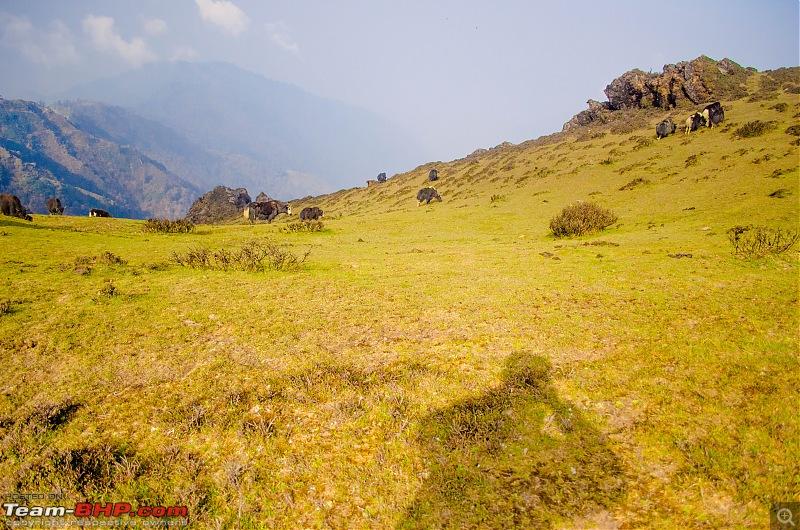 Phalut: The Meadowlands of the East-03.jpg