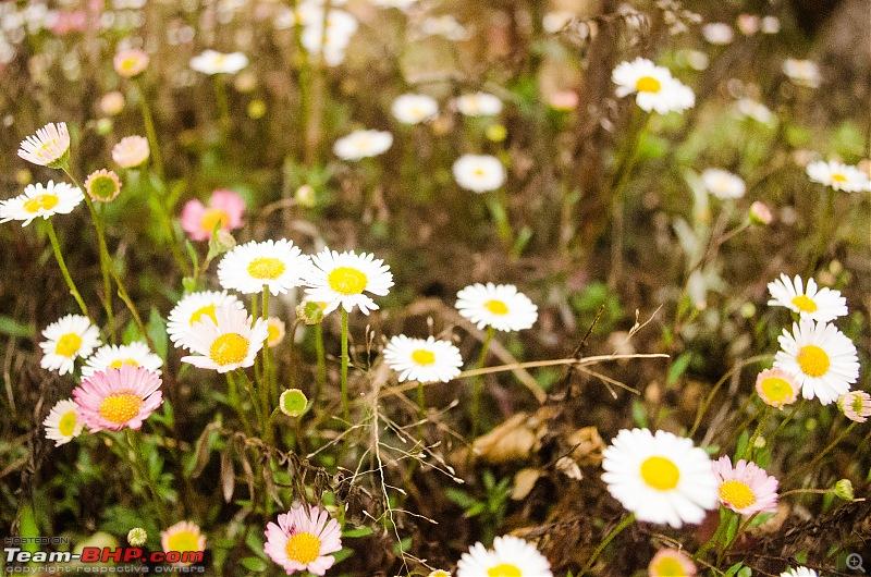 Phalut: The Meadowlands of the East-08.jpg