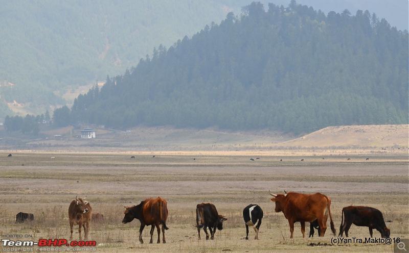 Alto'ed: Blessed in Bhutan-dsc_2260.jpg