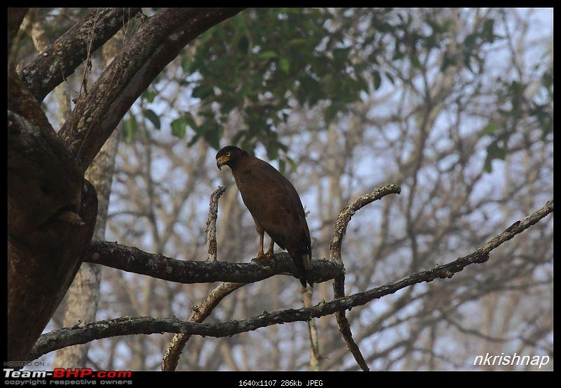Solitary Exploration of the Nagarhole Forests-img_1032.jpg