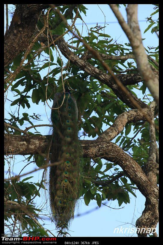 Solitary Exploration of the Nagarhole Forests-img_1056.jpg